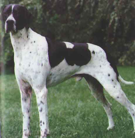 Pointer | Dog Training Aids